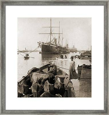 Cattle In A Small Boat Destined Framed Print by Everett