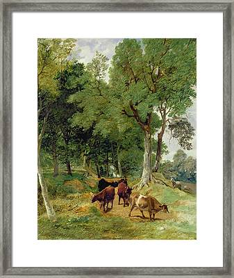 Cattle On A Devonshire Framed Print by T S Cooper and F R Lee