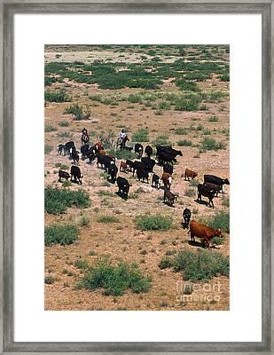 Cattle Round Framed Print