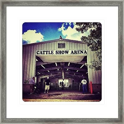Cattle Show Arena Framed Print