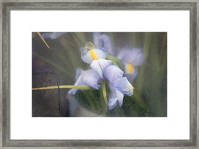 Caught And Waiting Framed Print