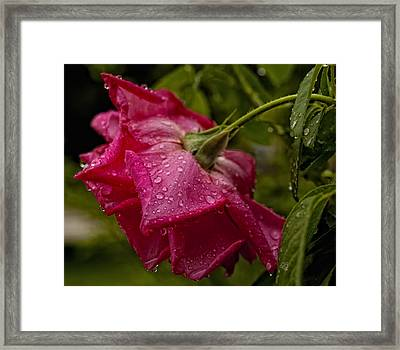 Caught In The Rain Framed Print by Barbara Middleton