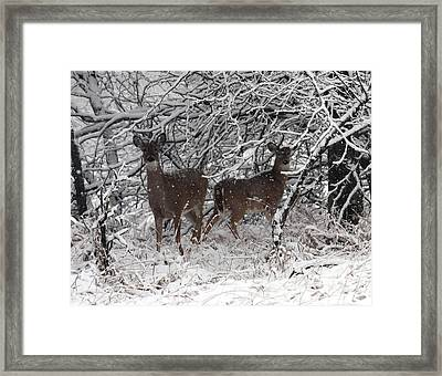 Framed Print featuring the photograph Caught In The Snow Storm by Elizabeth Winter