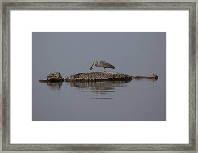 Framed Print featuring the photograph Caught One by Eunice Gibb