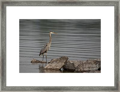 Framed Print featuring the photograph Cautious by Eunice Gibb