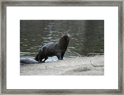Cautious Mother Framed Print by Jack Norton