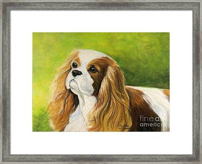 Cavalier King Charles Spaniel  Framed Print by Charlotte Yealey