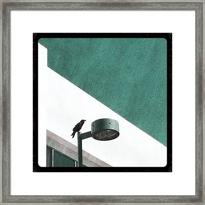 CAW Framed Print by Kevin Bergen