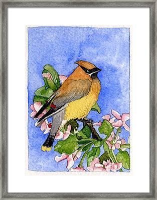 Cedar Waxwing In Spring Framed Print by Eunice Olson