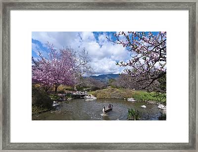 Celebrating Spring Framed Print by Mike Herdering