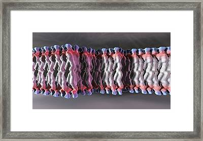 Cell Plasma Membrane Framed Print