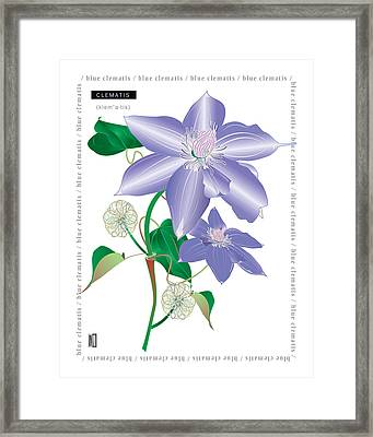Celmatis Framed Print by Michael Maskarinec