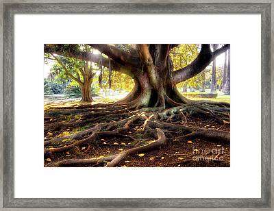 Centenarian Tree Framed Print