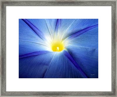 Framed Print featuring the photograph Centerpiece  Blue Morning Glory by George Bostian