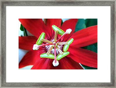 Framed Print featuring the photograph Centerpiece  Passion Flower 001 by George Bostian
