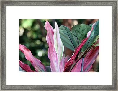 Centerpiece Framed Print