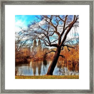 #centralpark #park #outdoor #nature #ny Framed Print