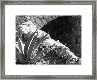Century Plant By Jogging Trail Framed Print by Louis Nugent