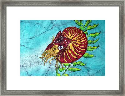 Chambered Nautilus Framed Print by Shari Carlson