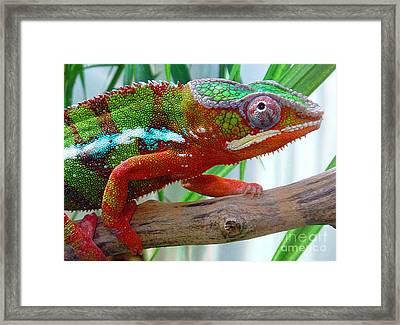 Chameleon Close Up Framed Print by Nancy Mueller