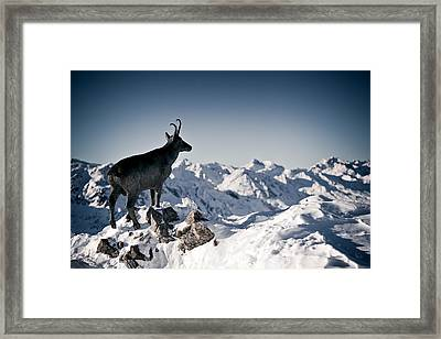 Chamois Watching Over Austria Framed Print by RICOWde