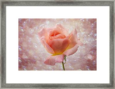 Champagne Rose. Framed Print by Clare Bambers