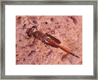 Framed Print featuring the photograph Chance Encounter by Craig Wood