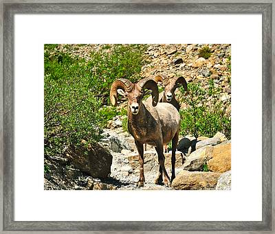 Chance Encounters Le Framed Print by Greg Norrell