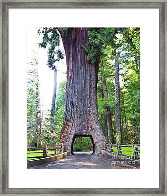 Chandelier Drive Thru Redwood Tree Framed Print by David Buffington
