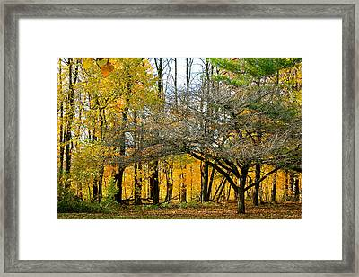 Change In The Air Framed Print by Christie Minalga
