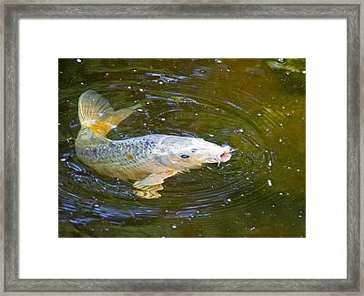 Changing Directions Framed Print by Wayne Stabnaw