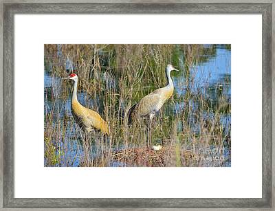 Changing Of The Guards Framed Print