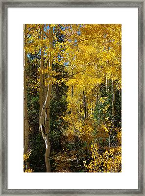 Framed Print featuring the photograph Changing Seasons by Vicki Pelham