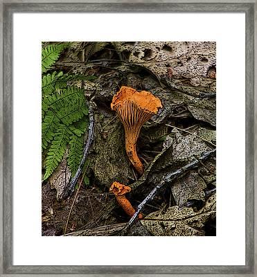 Framed Print featuring the photograph Chanterelle by Michael Friedman