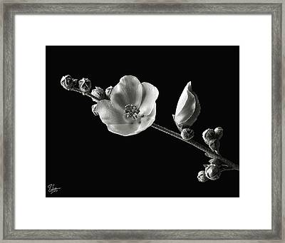 Chaparral Mallow In Black And White Framed Print by Endre Balogh