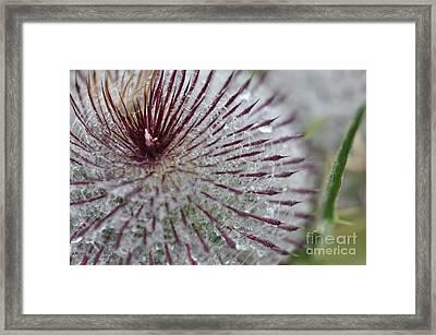 Chardon Framed Print