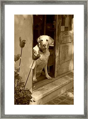 Charleston Shop Dog In Sepia Framed Print by Suzanne Gaff