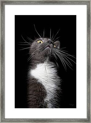 Charlie Boy Framed Print by Derek Byrne
