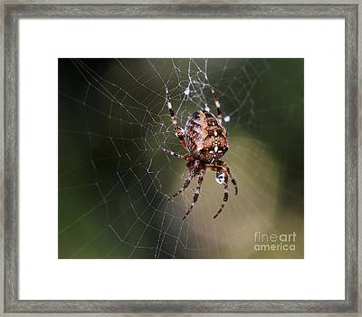 Charlottes Bigger Friend Framed Print by Bob Christopher