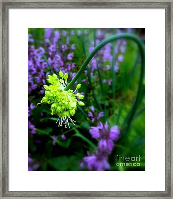 Chartreuse Framed Print by Maria Scarfone