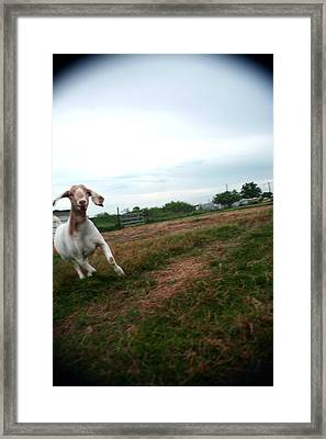 Framed Print featuring the photograph Chased By A Crazy Goat by Lon Casler Bixby