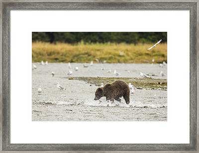 Chasing Pinks Framed Print by Tim Grams