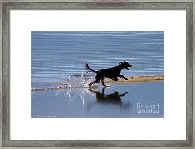Framed Print featuring the photograph Chasing Reflections by Mitch Shindelbower