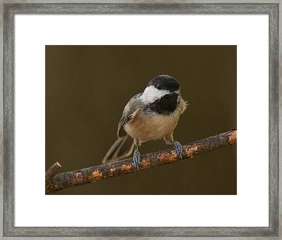 Check Me Out Framed Print by Don Wolf