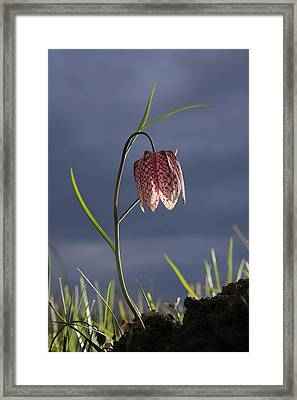 Checker Framed Print by Octavian Chende
