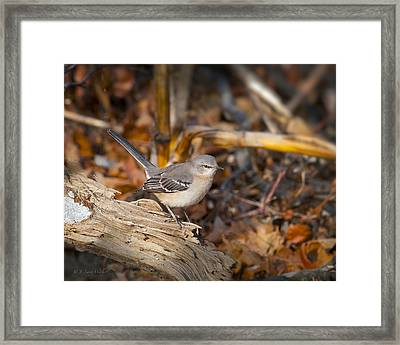 Checking Out His Territory - Mockingbird Framed Print by J Larry Walker