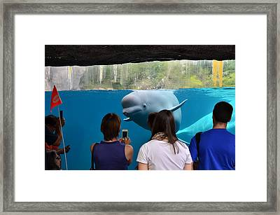 Checking Out Todays Crowd Framed Print by William Hensler