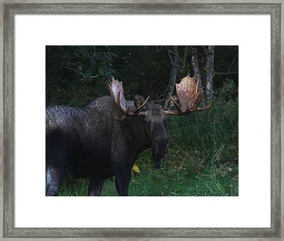 Framed Print featuring the photograph Checking You Out by Doug Lloyd