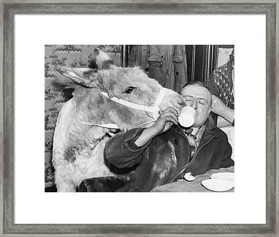Cheeky Donkey Framed Print by Fox Photos