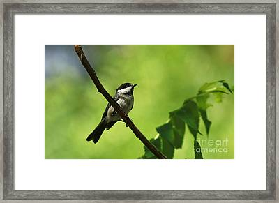 Cheerful Expression Framed Print by Inspired Nature Photography Fine Art Photography